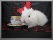 Карликовые Кролики из питомника-mr.Моркoffкин