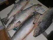 Оптовые поставки свежемороженой рыбы и морепродуктов!