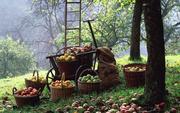 Продаем саженцы плодовых деревьев разных сортов.