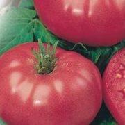 Продаем семена томатов в Краснодаре опт и розница